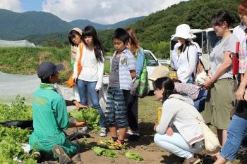レタスの収穫方法を説明する原農場長