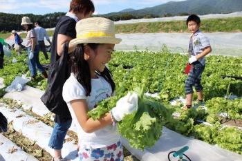 笑顔で楽しみながら収穫体験をする参加者