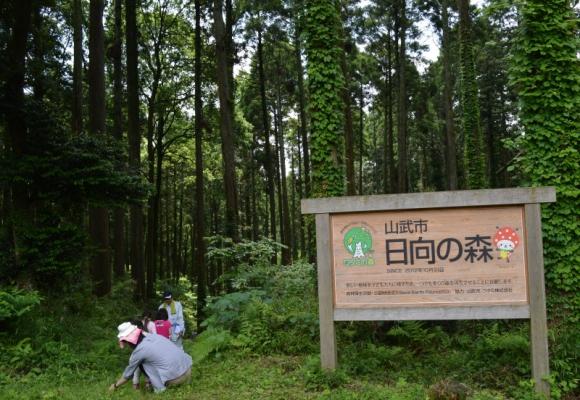 生物多様性が豊かな日向の森