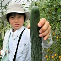 生の野菜をそのまま味わう。新鮮さと野菜のおいしさに感動