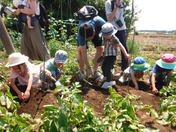 伝統的な三富新田の「有機堆肥農法」で栽培する石坂ファーム。地域の方などと収穫体験なども行う