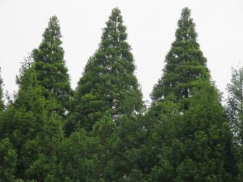 緑豊かな山武の森