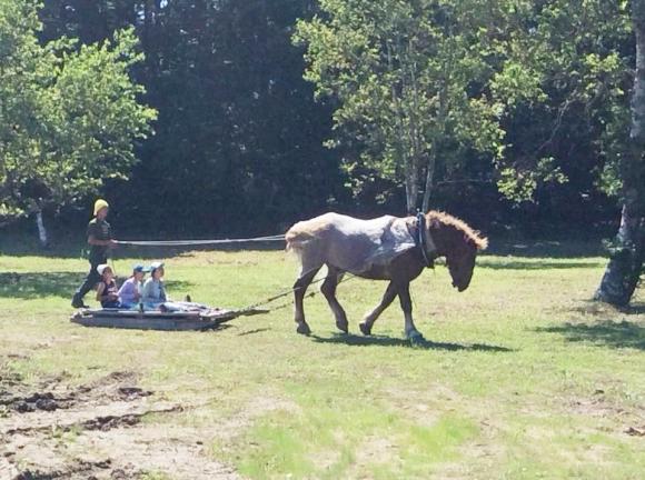 馬ぞり体験。間近で見る馬の姿が強く印象に残った