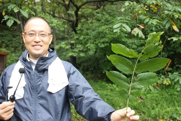 福井さんが手にしているのは「オニグルミ」という植物、葉が分かれているように見えるが、これで1枚の葉だという