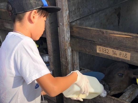 ワタミファーム美幌峠牧場では、子牛へミルクをあげた。この子牛も、成長したら食肉として出荷されるのだろうか
